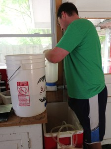 Crushing the weighed grain (in the bucket)